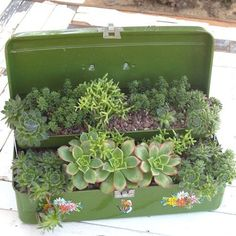 Recycle old toolbox or tacklebox into a planter for succulents.