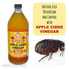 Natural flea prevention and control with apple cider vinegar. ACV image source: bragg.com. Flea image source: wkanimalhospital.com.