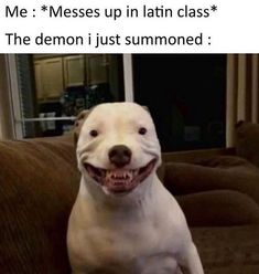 The 15 Funniest Pitbull Memes of the Week!