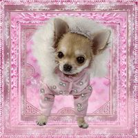 Sweet Dreams Pictures, Chihuahua Quotes, Cute Good Morning Quotes, Cute Little Animals, Puppy Love, Cats And Kittens, Fur Babies, Cute Dogs, Puppies