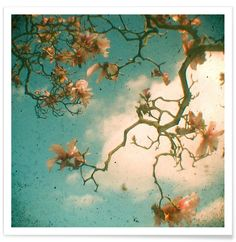 Magnolia fall als Premium Poster door Cassia Beck | JUNIQE