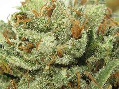 Exploring the scientific world with Sour Kush marijuana strain