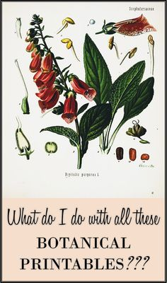 What do I do with all these botanical printables?  A resource for inspiration of where to use botanical printables, how to print them, and where to buy inexpensive frames!