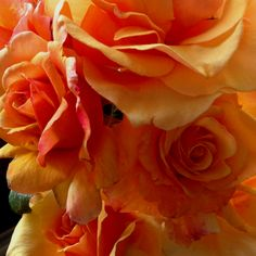 Outside five make roses come alive!