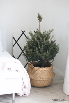 That´s christmas to me - minikuusi | Coconut White