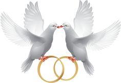 pombinhas com alianças