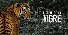 Sulle orme della tigre