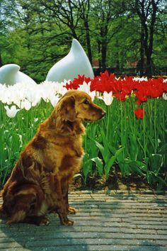 Alex in Keukenhof, Netherlands