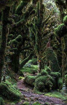 Kapakpanui trail, New Zealand