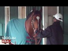 The training team that stood this town and the Thoroughbred racing world on its head a year ago is back in Baltimore. Thanks to Goldencents, Team O'Neill has a return engagement in the Preakness. Check out WBAL's Scott Wykoff's blog.