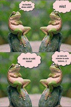 Funny Tweets, Funny Jokes, Info Board, Animals And Pets, Funny Animals, Funny Images, Funny Pictures, English Jokes, Good Jokes