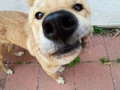 {funny dog, close up, big nose, dog selfie}