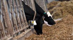 """Crise agricole : """"L'élevage est une aberration"""""""