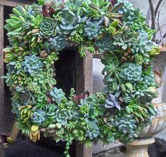 Live Succulent Wreath 15 Succulent Wreath Square by tobieanne, $90.00