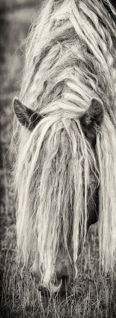 myviewfromsomewhere:  (via Pin by Shabby Cottage Studio- Gail Schmidt on Animal Love | Pinterest)