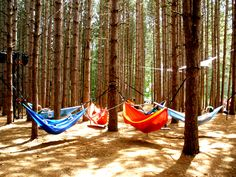It may not be far, but it is one of my favorite places on earth. Sherwood Forest, Outdoor Furniture, Outdoor Decor, Earth, Places, Music, Life, Garden Furniture Outlet, Muziek