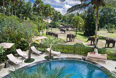 The Elephant Safari Lodge, in Taro, Bali, Indonesia