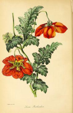 v.9 (1843) - Paxton's magazine of botany, - Biodiversity Heritage Library