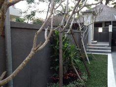 The villa Bali, Pride, Villa, Tropical, Plants, Flora, Plant, Fork, Gay Pride