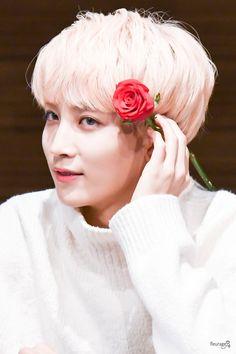 Su belleza me hace mal Woozi, Mingyu, Jooheon, Nct, Boo Seungkwan, Jeonghan Seventeen, Joshua Hong, Seventeen Debut, Fandom