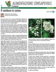 Articolo scritto per in numero di maggio 2017 di Vivere Sostenibile Romagna – È da marzo che gli occhi si riempiono della bellezza delle fioriture di Madre Natura, ma quando incontro i mera…