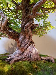 Bonsai Art, Bonsai Plants, Bonsai Trees, Cool Art, Awesome Art, Nirvana, Landscaping, Miniature, Gardening