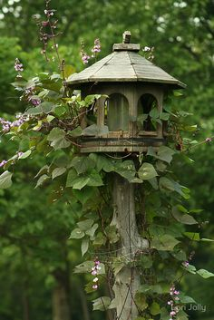 birdhouse wrapped in purple bean vines