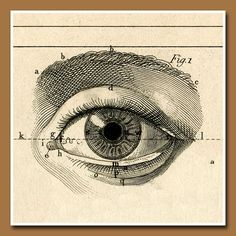 Anatomy for Artist - Ojo del alma Eye Illustration, Medical Illustration, Arte Black, Anatomy Art, Eye Anatomy, Vintage Medical, Arte Popular, Paperclay, Eye Art