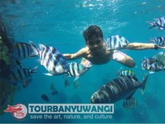 Paket MICE - A - paket wisata banyuwangi, paket tour banyuwangi Underwater, Whale, Tours, Fish, Pets, Animals, Whales, Animales, Animaux