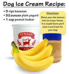Dog Ice Cream