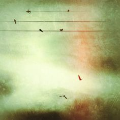 iPhoneography Tutorial { birds on wire } - app recipe from initial image to result with heavy cropping and resolution increase to compensate.
