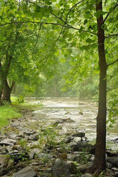 A peaceful river flowing through the Smoky Mountains