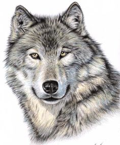 Love This!!!!!!! Wolf - drawing coloured pencils - more tattoo inspiration