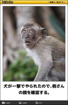 画像 Disneyland World, Haha Funny, Cute Animals, Jokes, Cool Stuff, Comics, Photograph, Meme, Monkeys