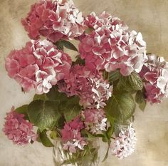 "Dianne Woods - ""Antique Hydrangeas"""