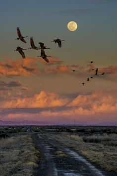 Flying by moonlight. Sandhill cranes flying by the moon over a road by David Soldano on 500 px . Beautiful Moon, Beautiful World, Stars Night, Afrique Art, Shoot The Moon, Moon Pictures, Belle Photo, Full Moon, Night Skies