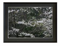 撮影地:新潟県村上市★山桜             2008/04/20撮影 写真は銀映プリントを使用しています※掲載の額入り写真はハメコミ合成です。 写真サ...|ハンドメイド、手作り、手仕事品の通販・販売・購入ならCreema。