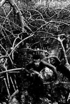 Catador de carangueijos trabalha na Ilha de Marajó, no Estado do #Pará: http://abr.io/5uGi