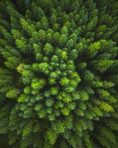 Perspective changes everything. Heres an aerial image above a lush forest