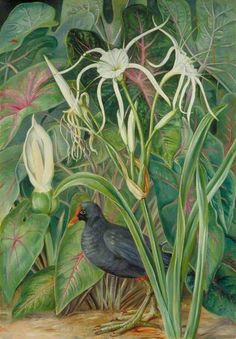 A Swamp Plant and Moorhen, Seychelles by Marianne North; c. 1882; Oil on board, Collection: Royal Botanic Gardens, Kew, England
