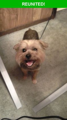 Great news! Happy to report that Olaf has been reunited and is now home safe and sound! :)