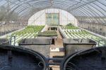 Lily Pad Farm Offers Free Aquaponics Seminar  http://idroponica.myblog.it/archive/2013/01/20/lily-pad-farm-offers-free-aquaponics-seminar.html