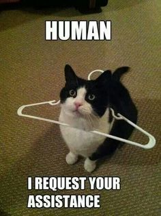 Human, I require your assistance.