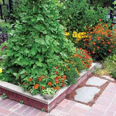 Tall Crops with Shorter Flowers ... In choosing the best flowers to plant with vegetables, pair tall crops with shorter flowers. These runner beans are surrounded by marigolds and zinnias.