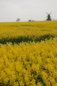 Sweden. Sommar i Skåne by Mr.Skaune, via Flickr