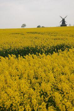 Sweden. Sommar i Skåne by Mr.Skaune, via Flickr
