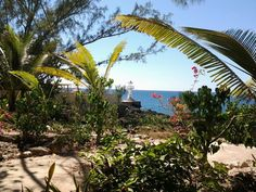 Sea Grape Villas - view from wild grape