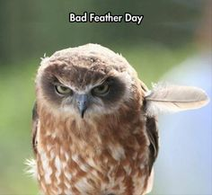 don't let bad feather days bother you ~ everything looks better with our jewelry ;) Tinkerbella.origamiowl.com http://on.fb.me/1mDj5p2
