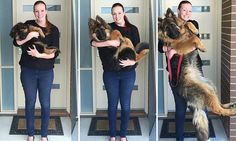 From playful puppy to bigger than a human in just eight months: Couple document their dog\'s extraordinary growth spurt in photos Nasra the German Shepherd has become an internet sensation Her owners Alex Dennison and Ashley Lewis posted a photo series showing Ashley cradling Nasra every month Now nine months, the lovable pooch is far too big for Ms Lewis to carry After posting on Reddit, the NSW couple\'s pictures have gone viral.