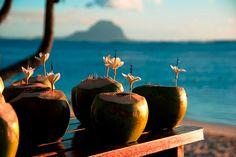 Coconut drinks at the beach Bucket List For Girls, Coconut Drinks, Coconut Water, Coconut Smoothie, Coconut Oil, Beach Drinks, Before I Die, Favim, Beach Bum